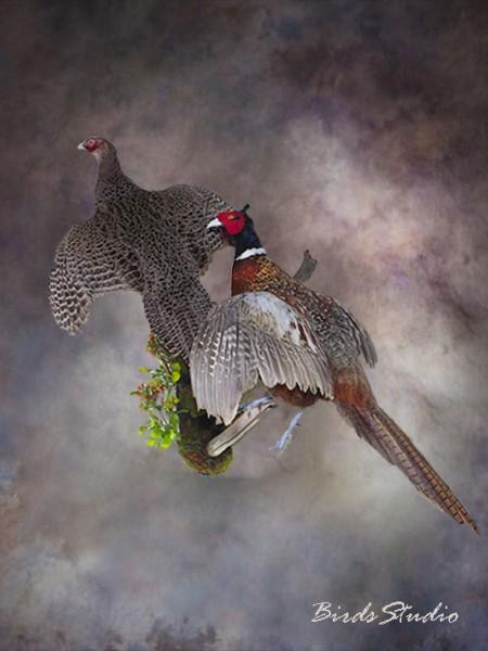 Чучело фазаны в полете