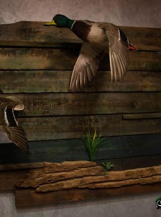 Чучело утки композиция