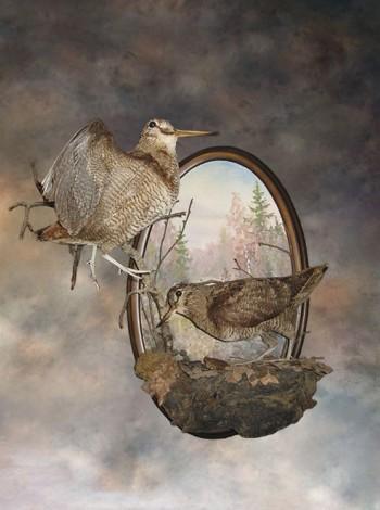 Чучело птиц  два вальдшнепа