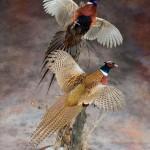 Купить чучела птиц