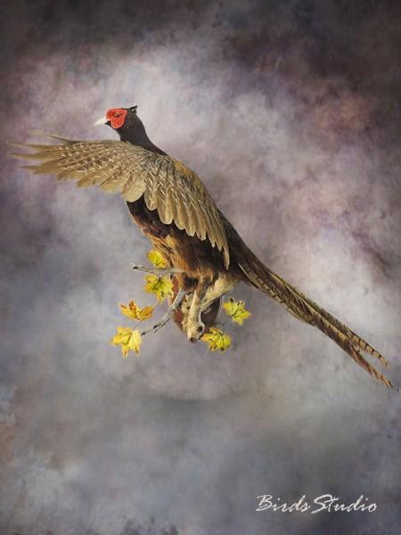 Чучело фазан