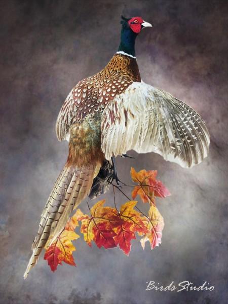 Чучело фазан охотничий