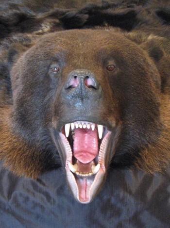 Купить шкуру медведя premium