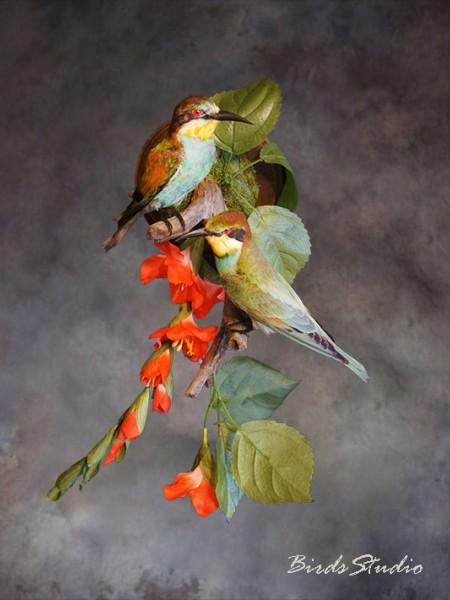 Чучело птиц золотистые щурки