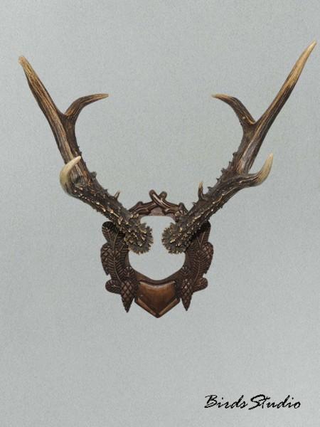 Рога косули на медальоне