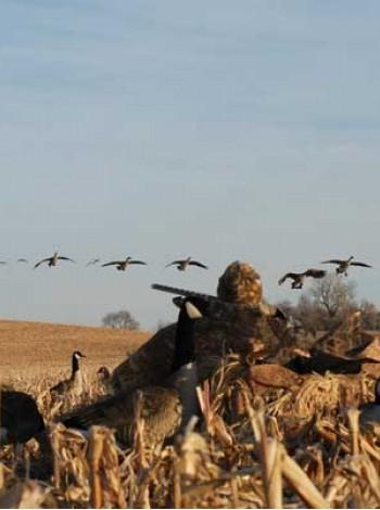 Охота на гуся