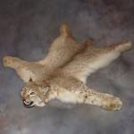 Купить ковры из шкур животных